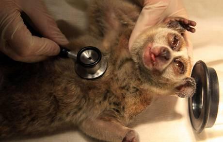 Veterinary-Medicine